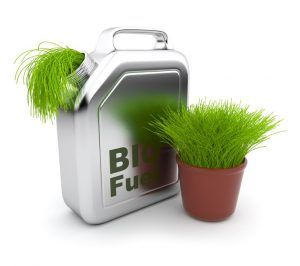 Can you use biodiesel in your generator?